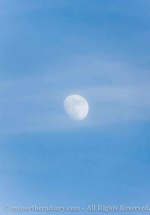 Spring-moon-in-a-blue-sky-CRW_2064.jpg