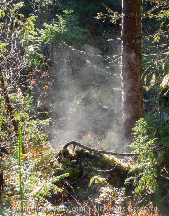 Steaming-rootstocks-and-stumps-under-autumnal-sun-CRW_4354.jpg