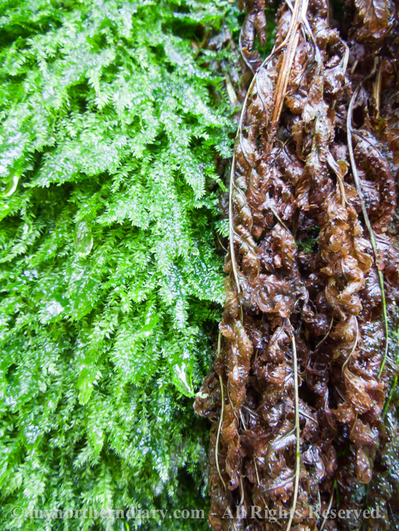 Wet-fern-and-moss-CRW_4381.jpg