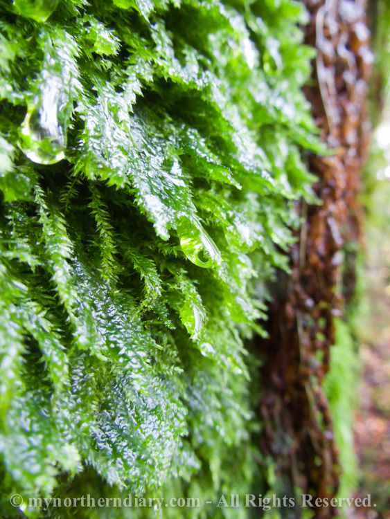 Wet-fern-and-moss-CRW_4384.jpg