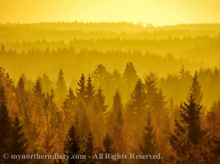 Golden morning, kultainen aamunkoitto