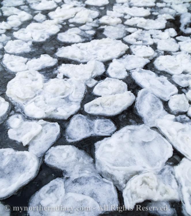icy shore, jainen ranta, pancake ice, pienia jaalauttoja_CRW_0777