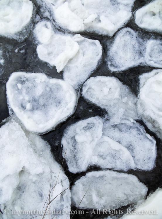 icy shore, jainen ranta, pancake ice, pienia jaalauttoja_CRW_0778