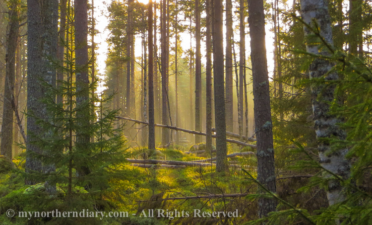 Rays of light in misty forest
