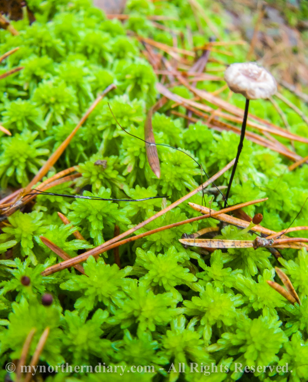 moss, mushroom, sammal, sieni_CRW_0215