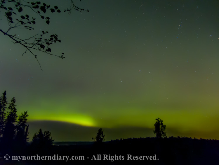 northern-lights-over-Finnish-forest-CRW_3615.jpg