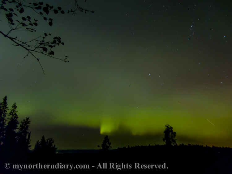 northern-lights-over-Finnish-forest-CRW_3617.jpg