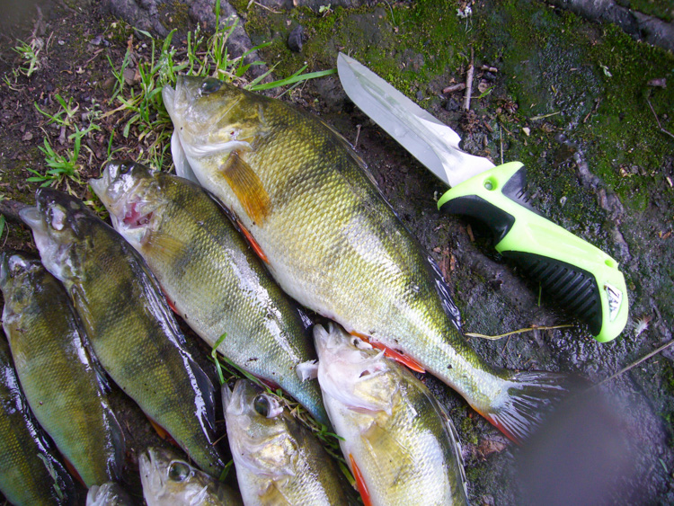 perch shot with speargun